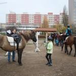 Toulcův dvůr - koně
